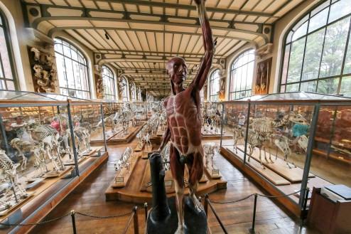 La galerie d anatomie compar e et de pal ontologie du mus um de paris des os des fossiles et - Jardin des plantes paris dinosaures ...
