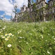 Un Jardin éphémère à l'hôtel de ville de Paris