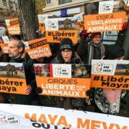 Mobilisation à Paris contre les animaux sauvages au cirque.